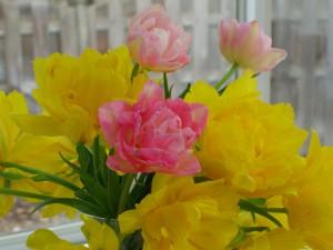 Spring Tulips            ©Diane Eblin