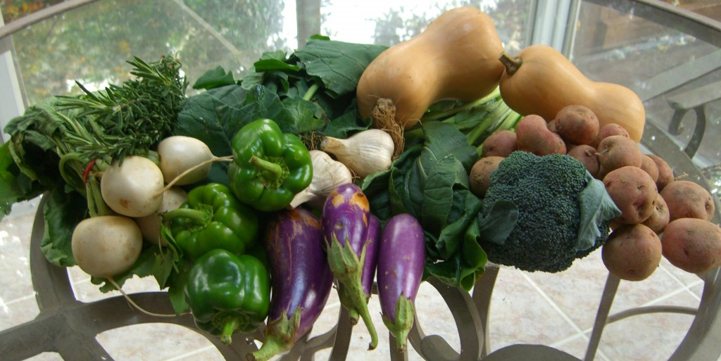 CSA October 14- butternut squash, potatoes, garlic, peppers, Hakurei turnips, Choi Sum, rosemary, collard greens, eggplant