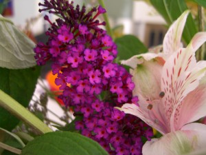 Summer flowers from butterfly bush